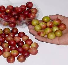 Camu-Camu – Have you ever heard of this?
